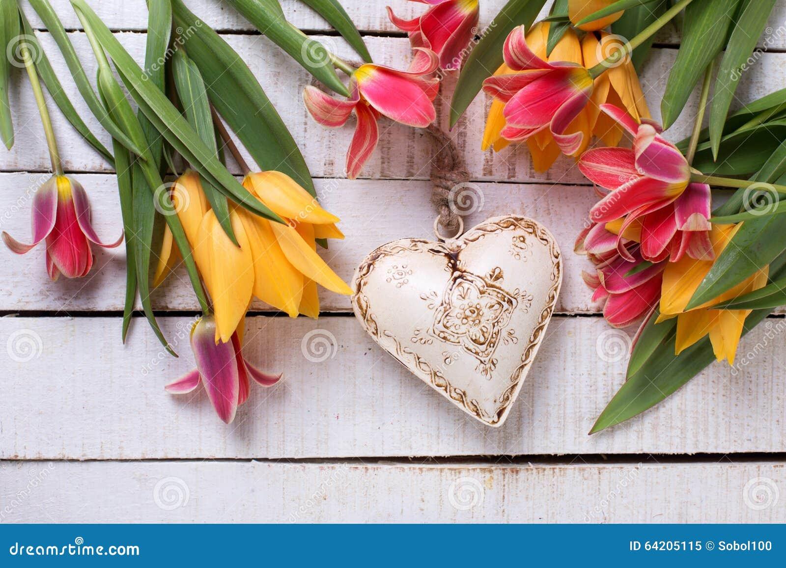 Tulipanes rojos y amarillos coloridos frescos y corazón decorativo blanco