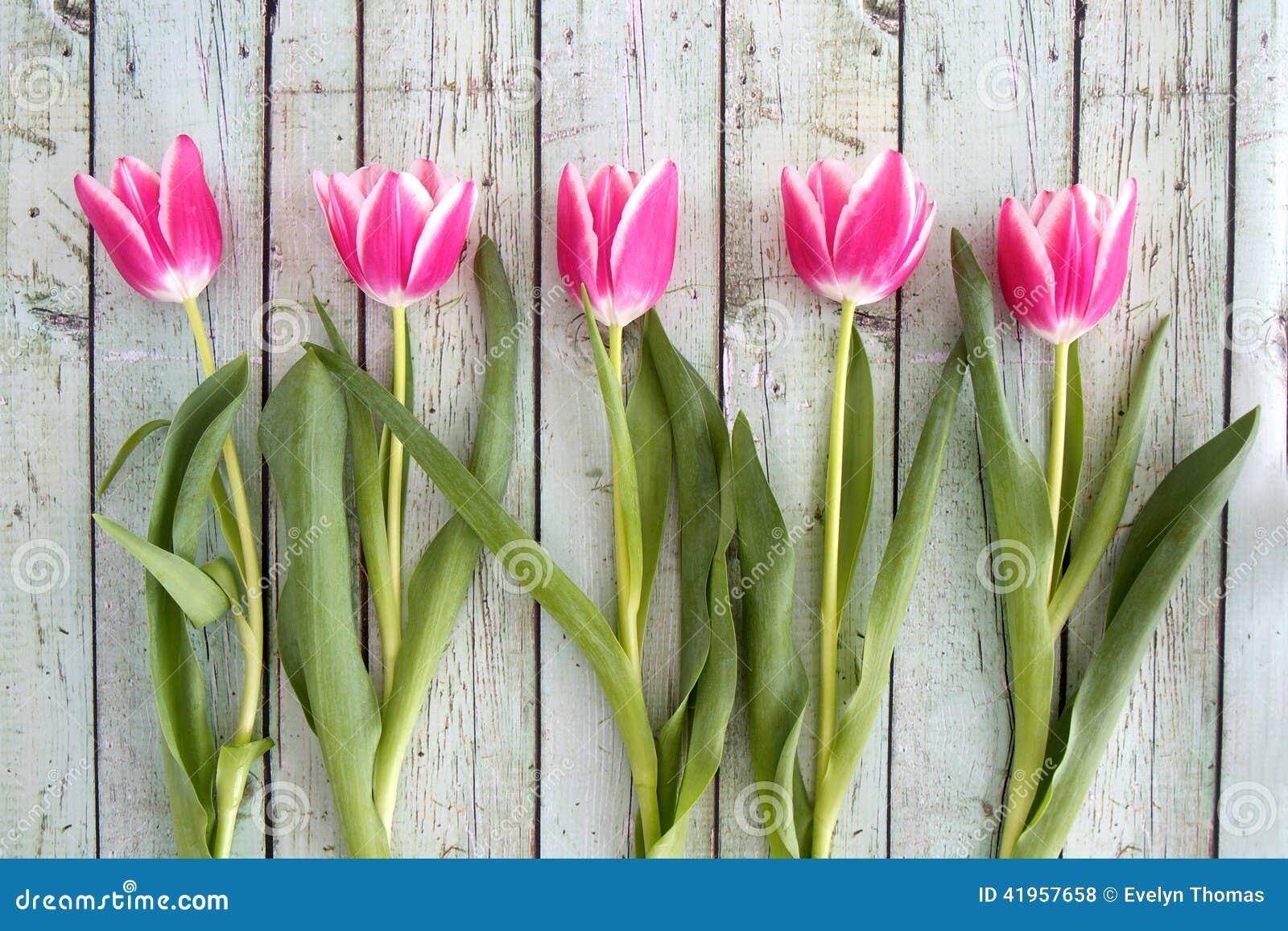 Tulipanes rosados en fila