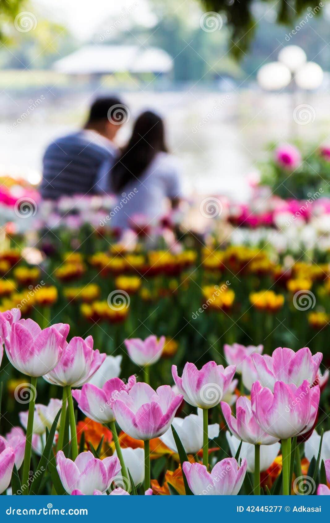 Tulipanes y fondo rosados de los pares