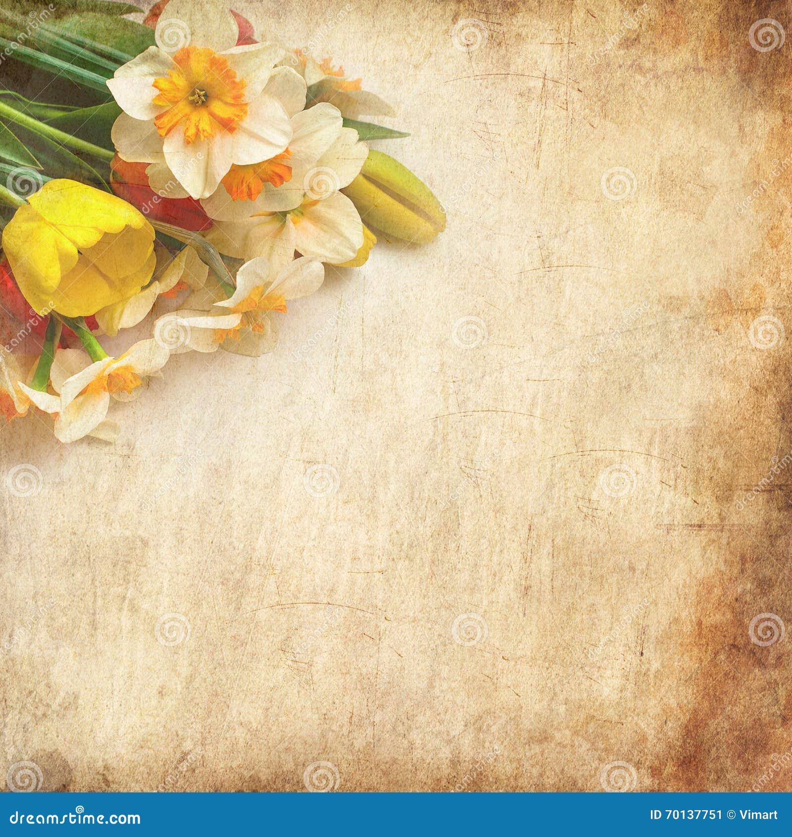 Tulipanes y narcisos hermosos de la primavera