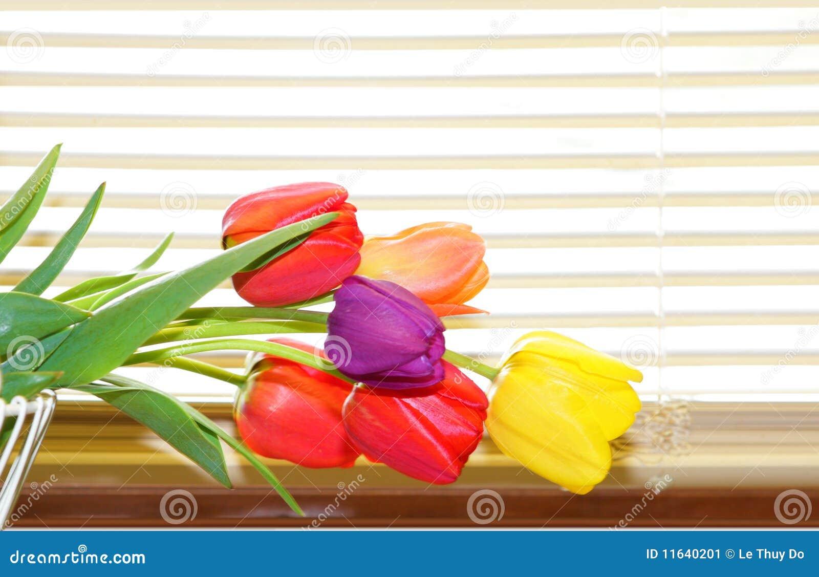 Tulipanes y persianas