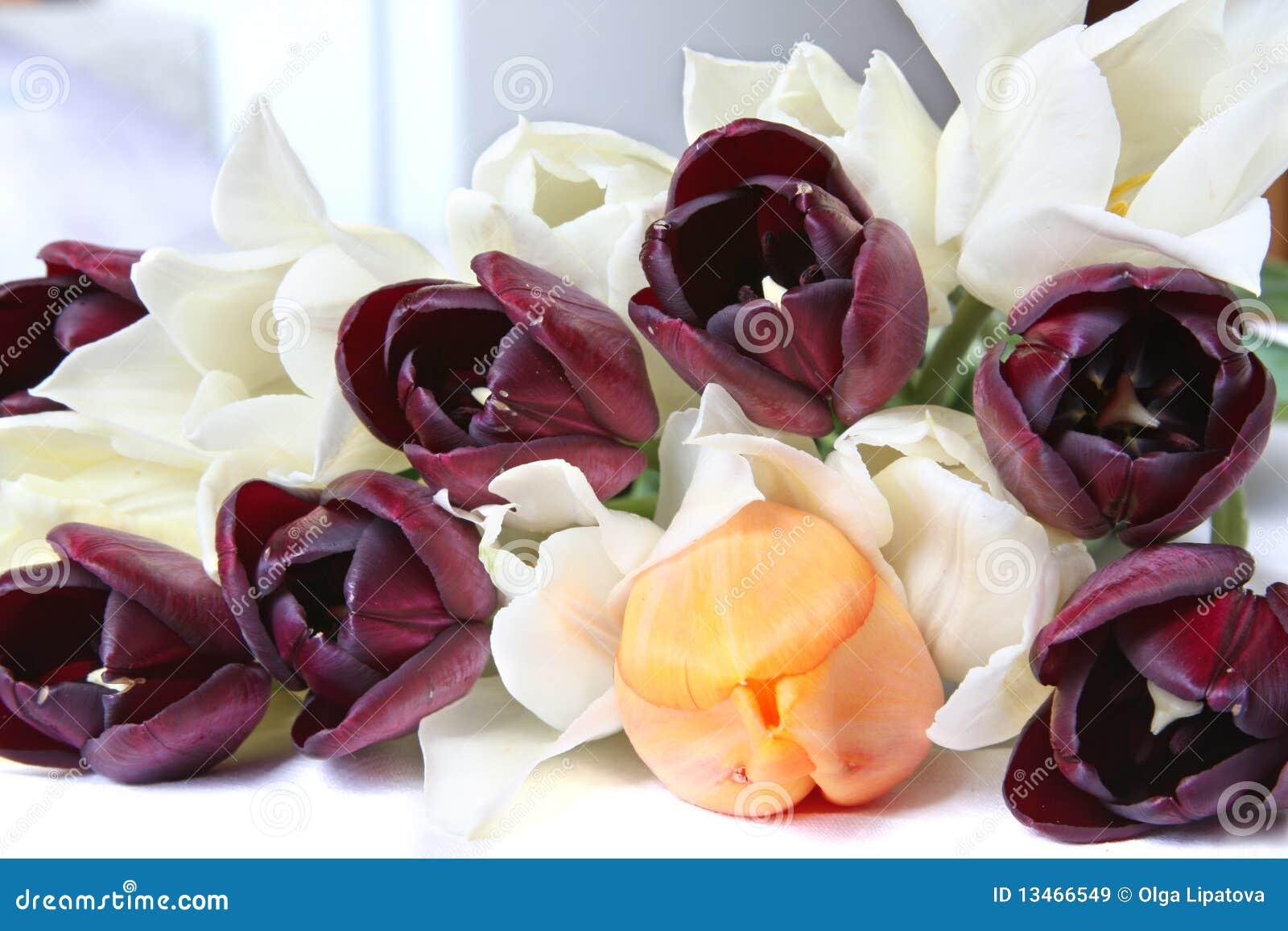 Tulipani bianchi arancioni e neri immagini stock libere for Tulipani arancioni