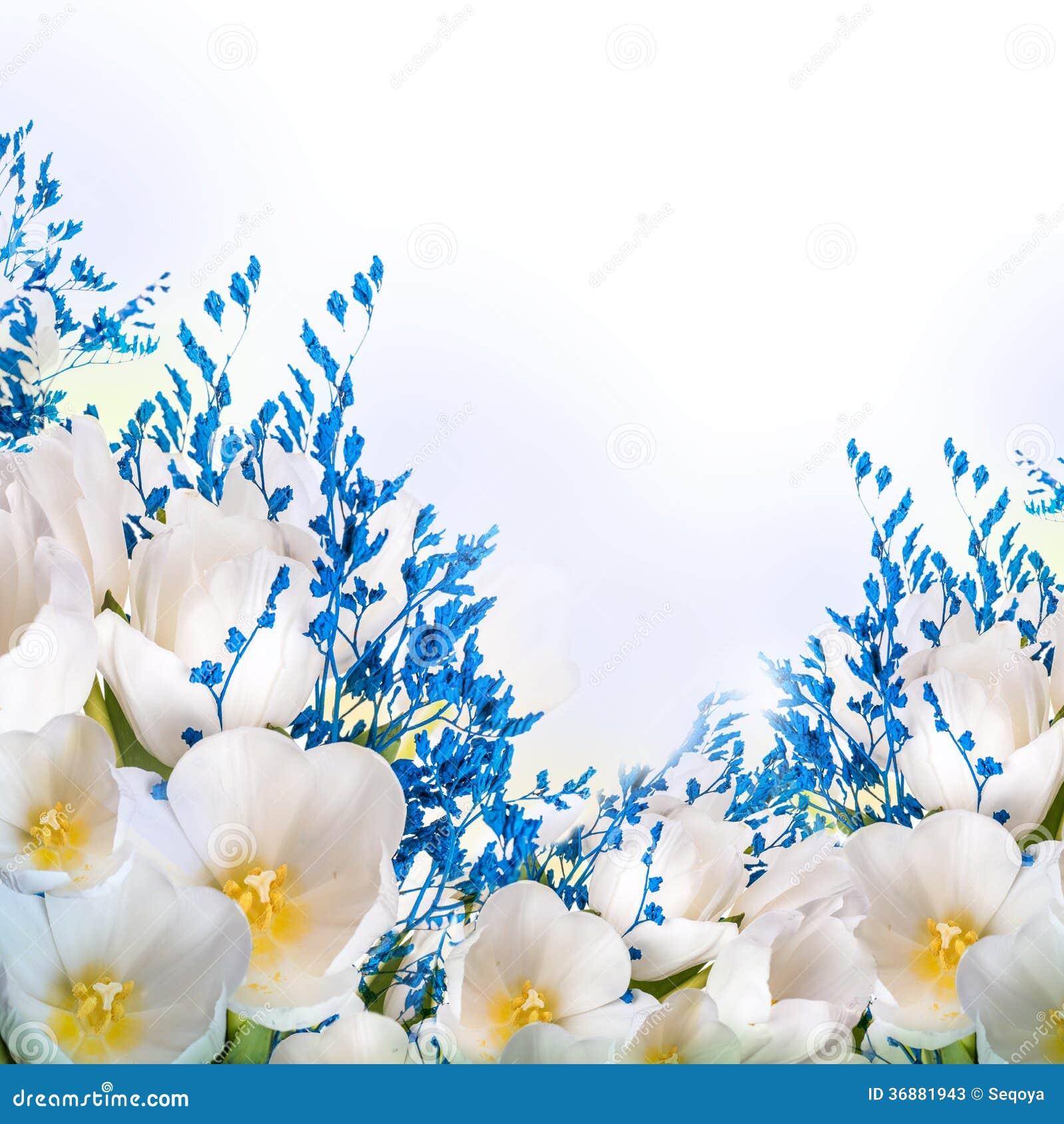 Download Tulipani Bianchi Con Erba Blu Immagine Stock - Immagine di bellezza, tulip: 36881943