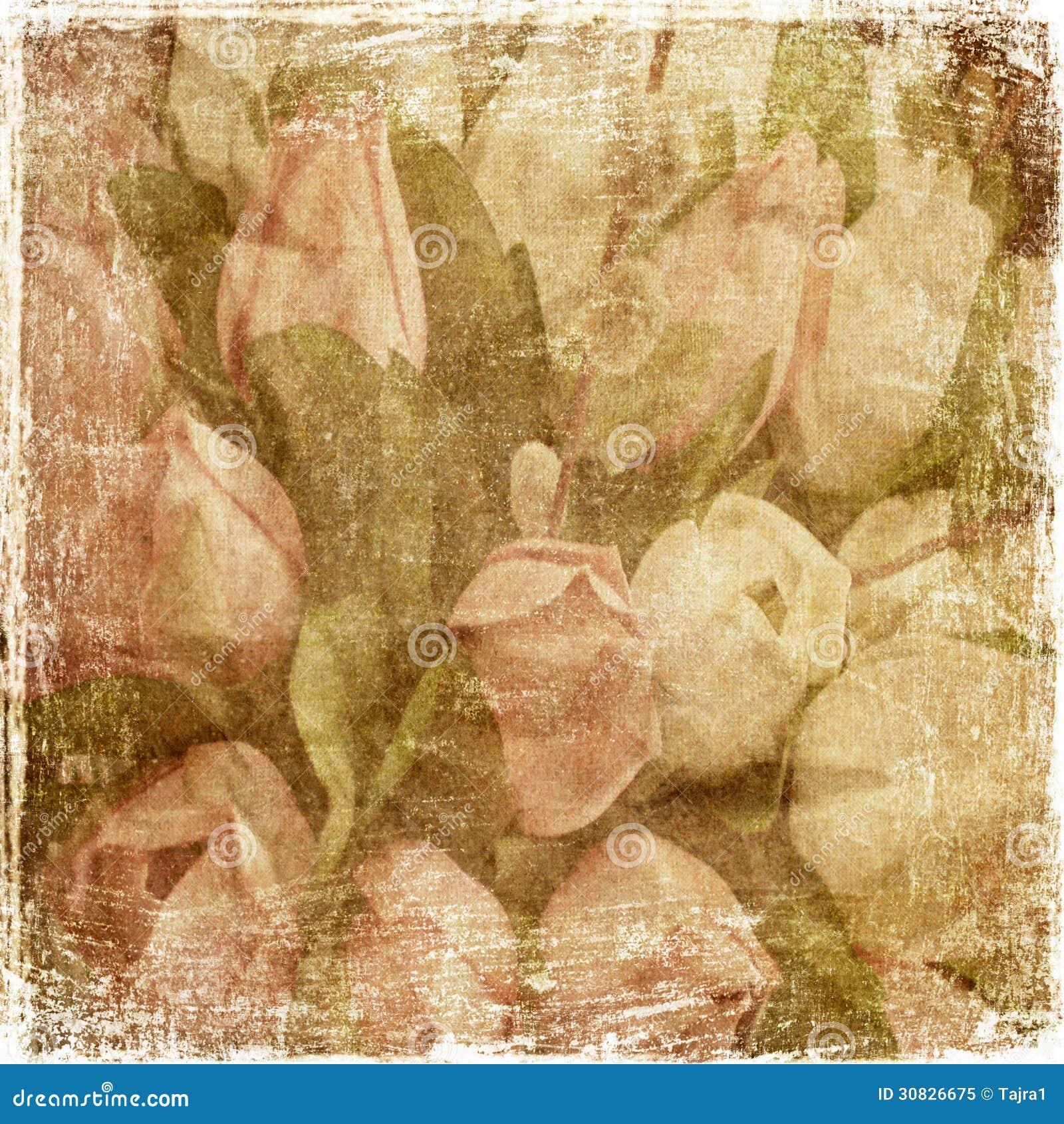 Tulipani d annata