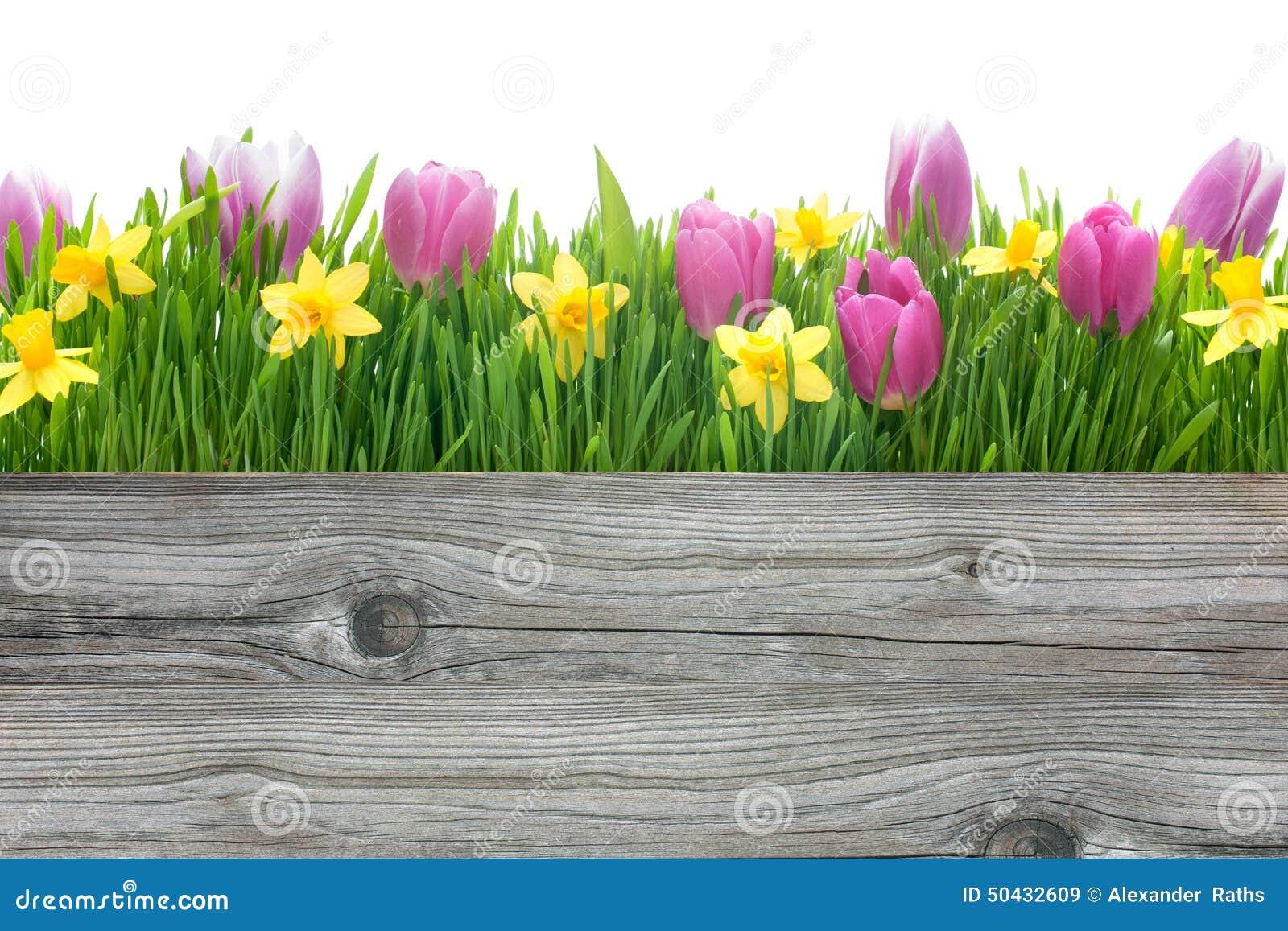 Tulipani della primavera e fiori dei narcisi