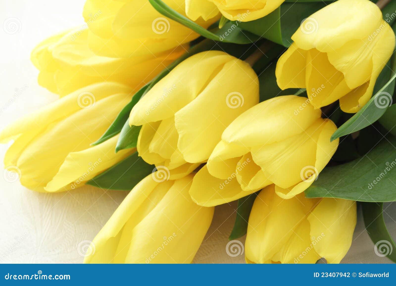tulipani gialli fotografia stock immagine 23407942