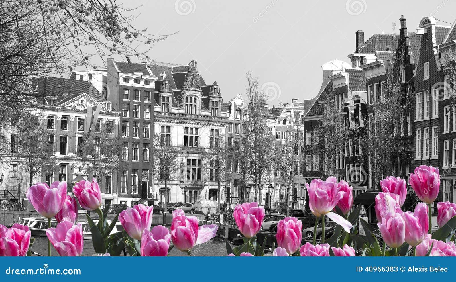 Tulipani rossi a amsterdam fotografia stock immagine for Amsterdam casa rosa