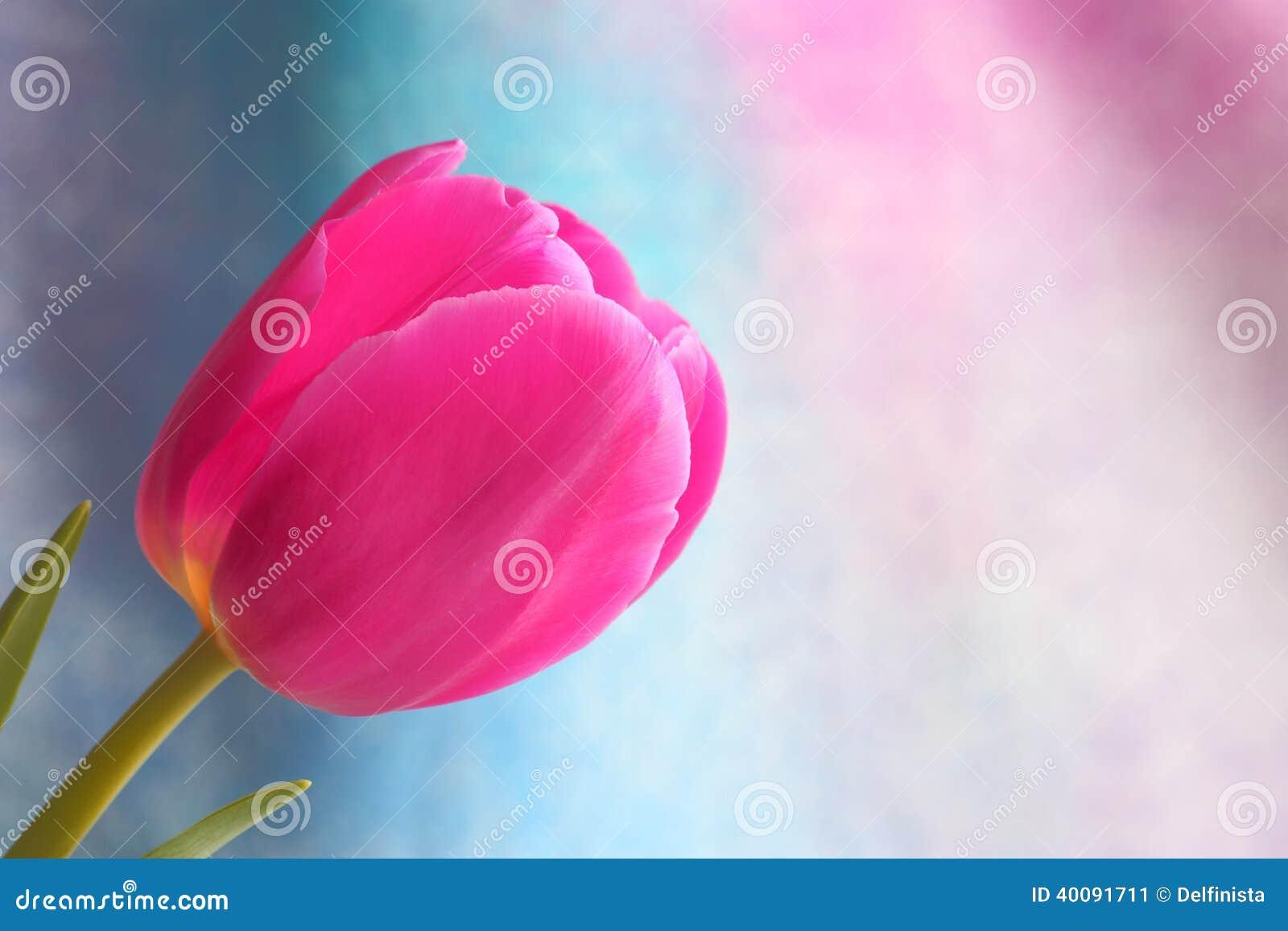 Tulipanowy kwiat: Matka dnia walentynek Akcyjne fotografie