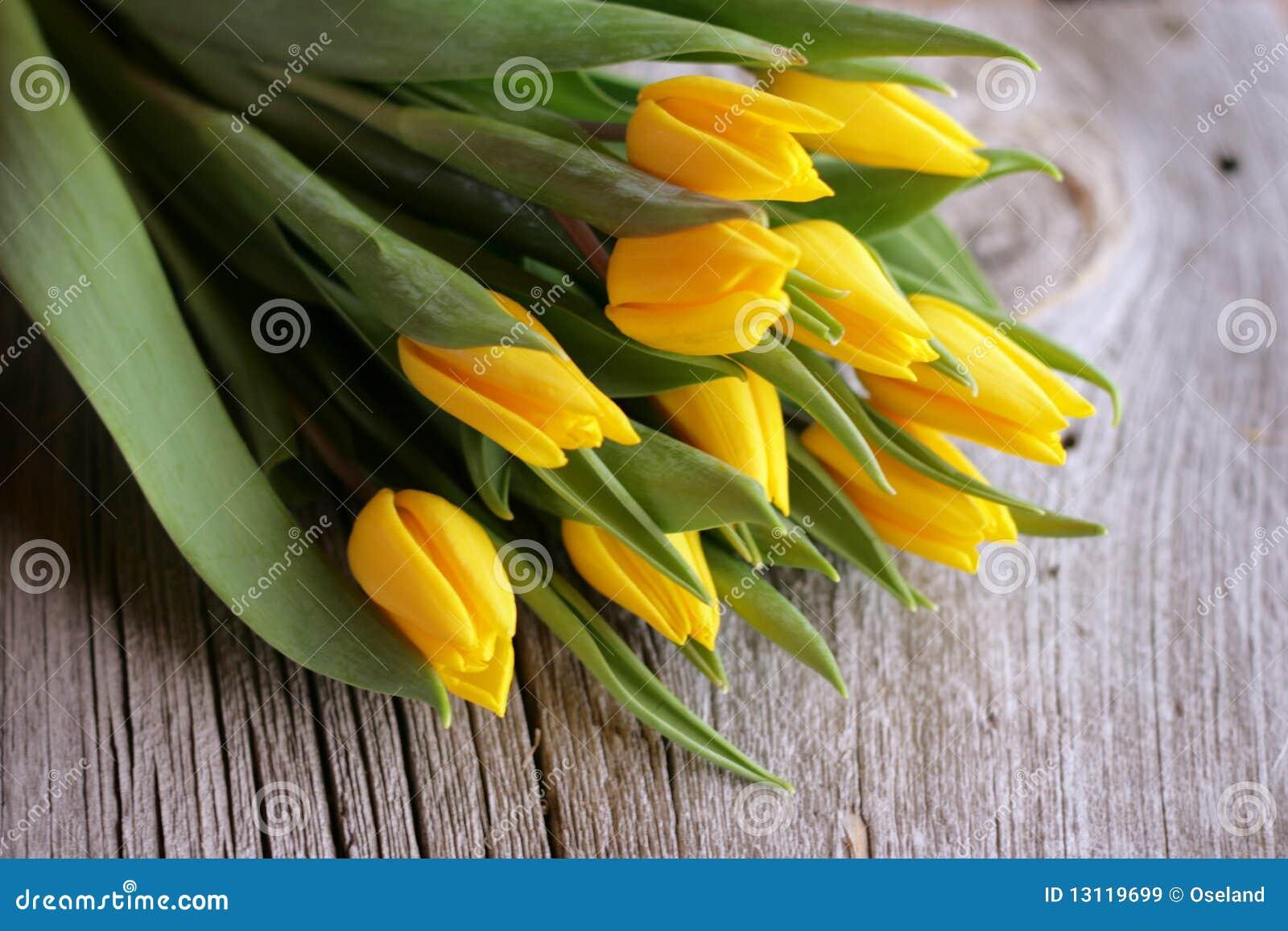 Tulipanu kolor żółty