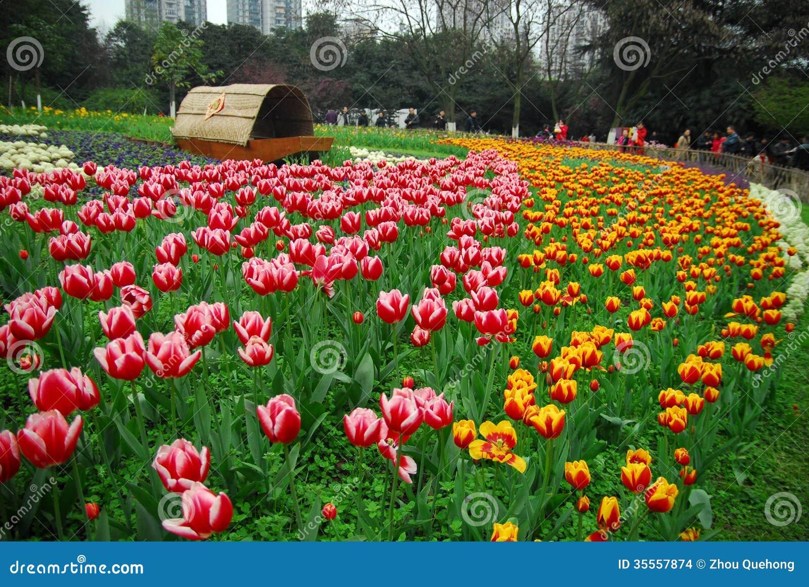 Tulipanu ogród