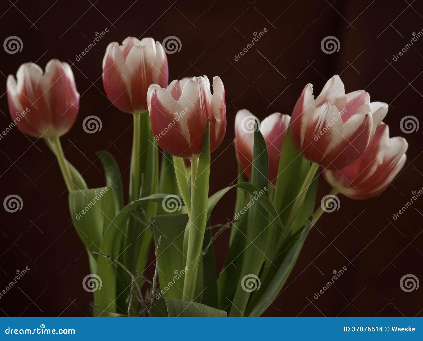 Download Tulipany zdjęcie stock. Obraz złożonej z tulipan, tulipany - 37076514