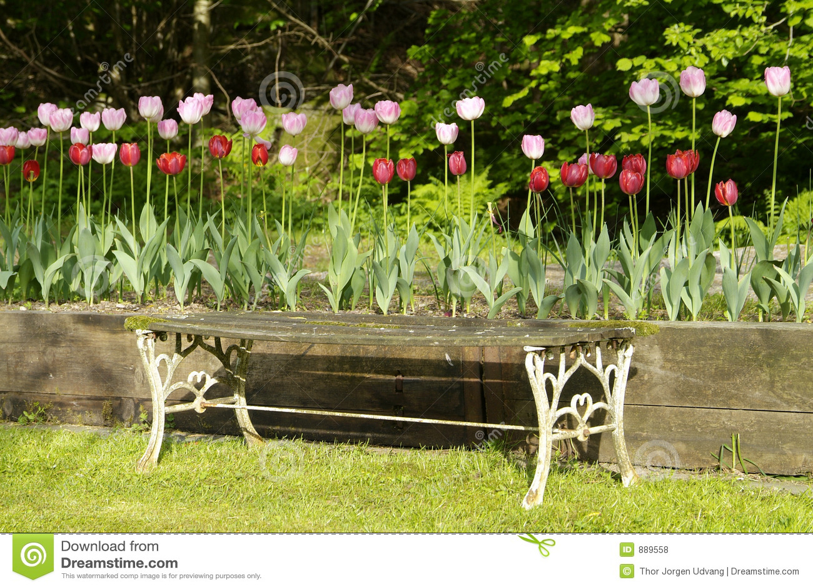 Tulipany ogrodowe stanowiska badawczego