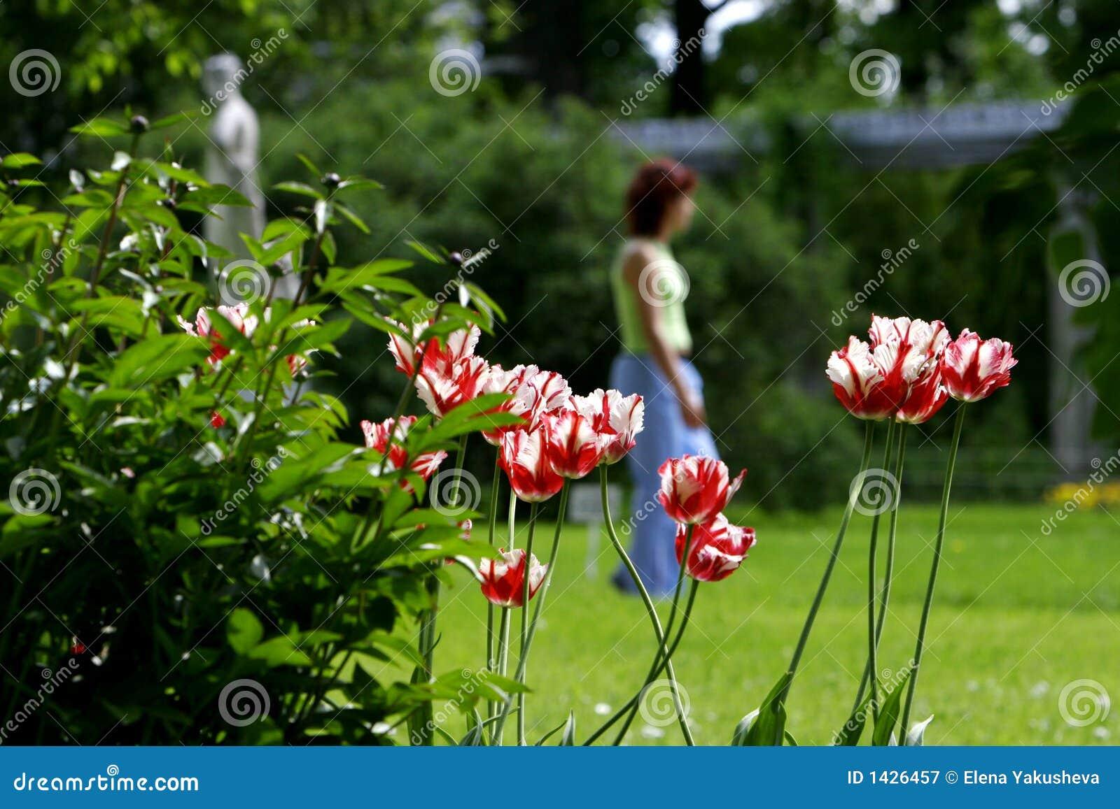 Tulipany park