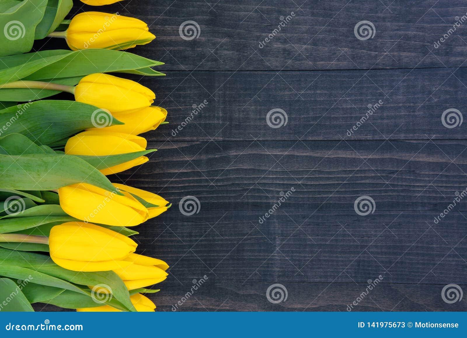 Tulipas amarelas no fundo de madeira escuro com espaço da cópia