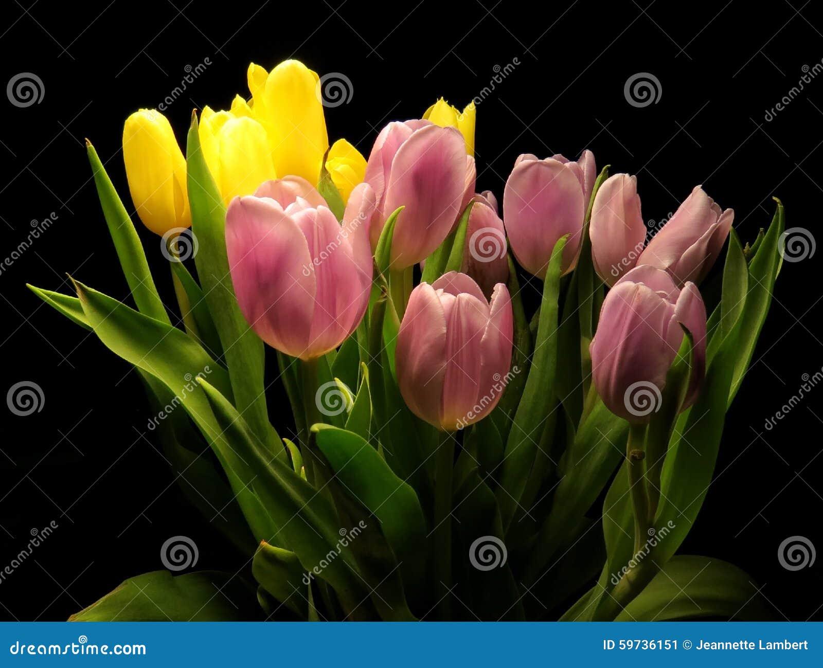 Tulipas cor-de-rosa e amarelas