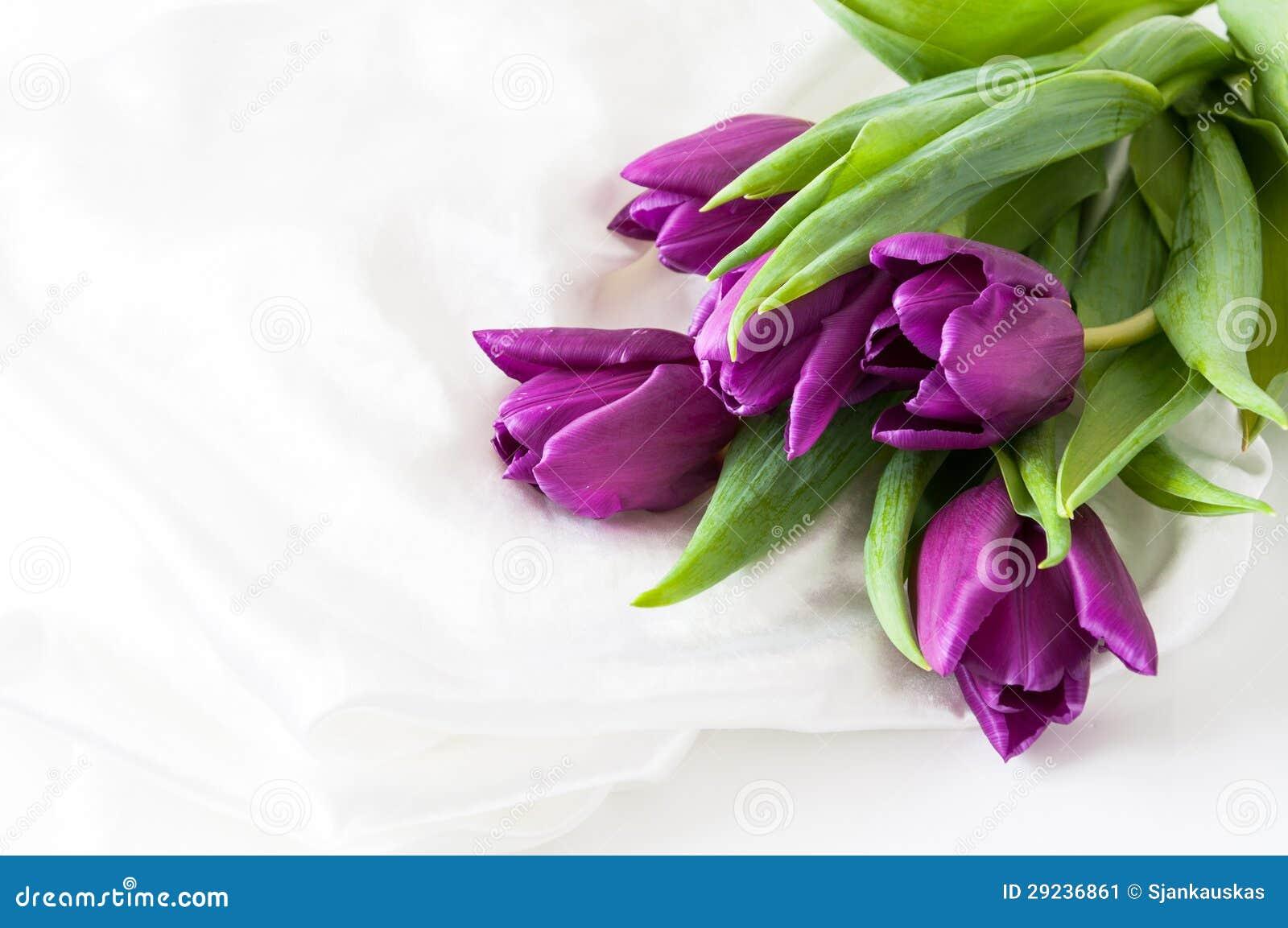 Download Tulipas roxas na seda imagem de stock. Imagem de cumprimentos - 29236861