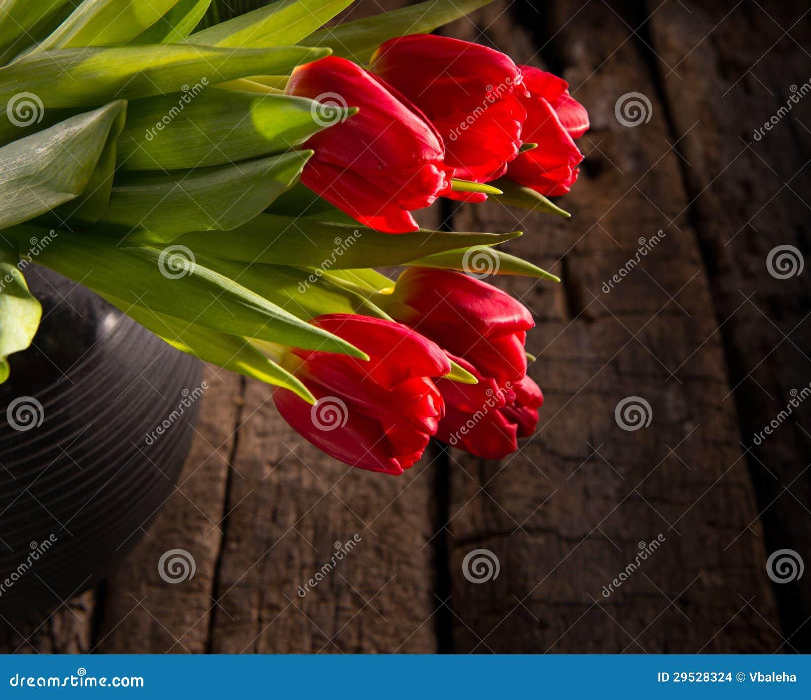 Tulipas vermelhas bonitas