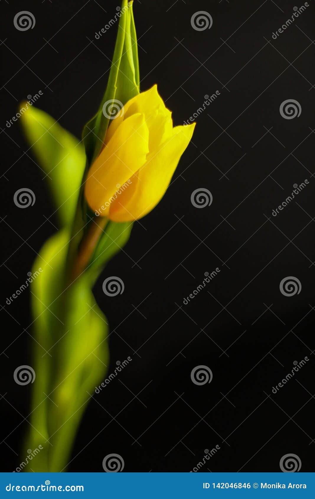 Tulipe simple - concept de ressort