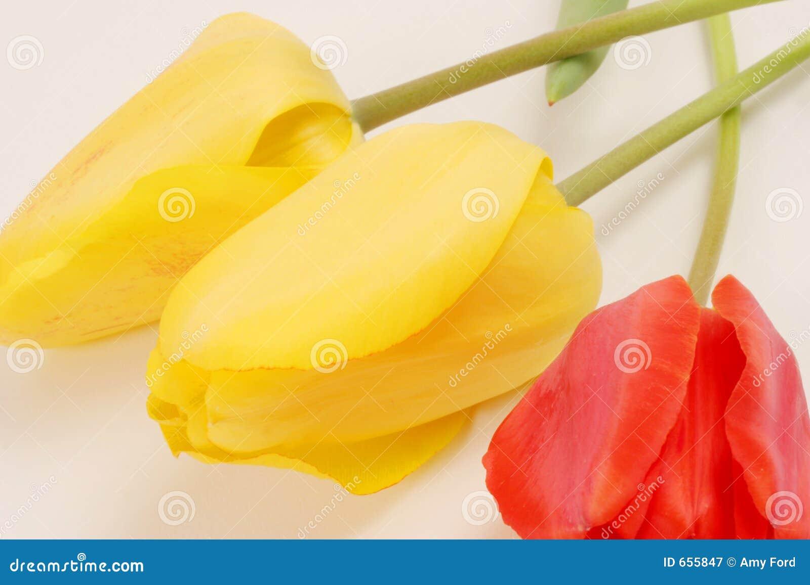 Tulipes #3