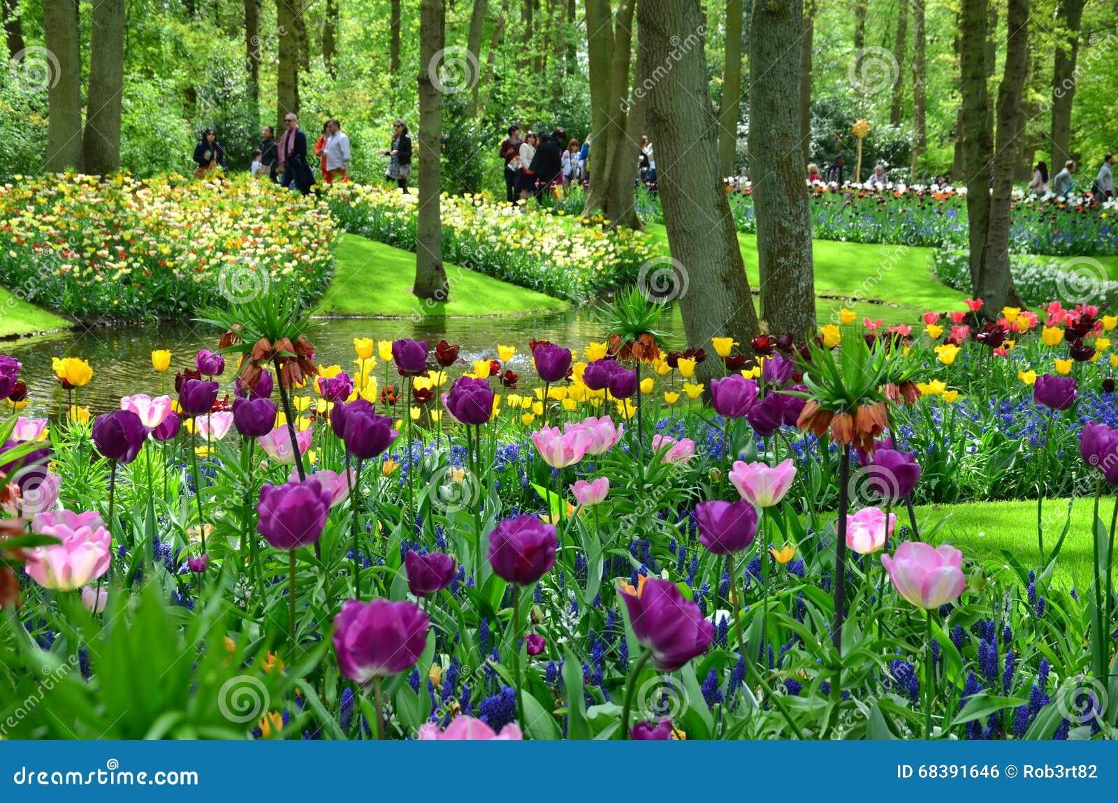 Tulipes au printemps sous le soleil lumineux dans le for Jardin keukenhof 2015