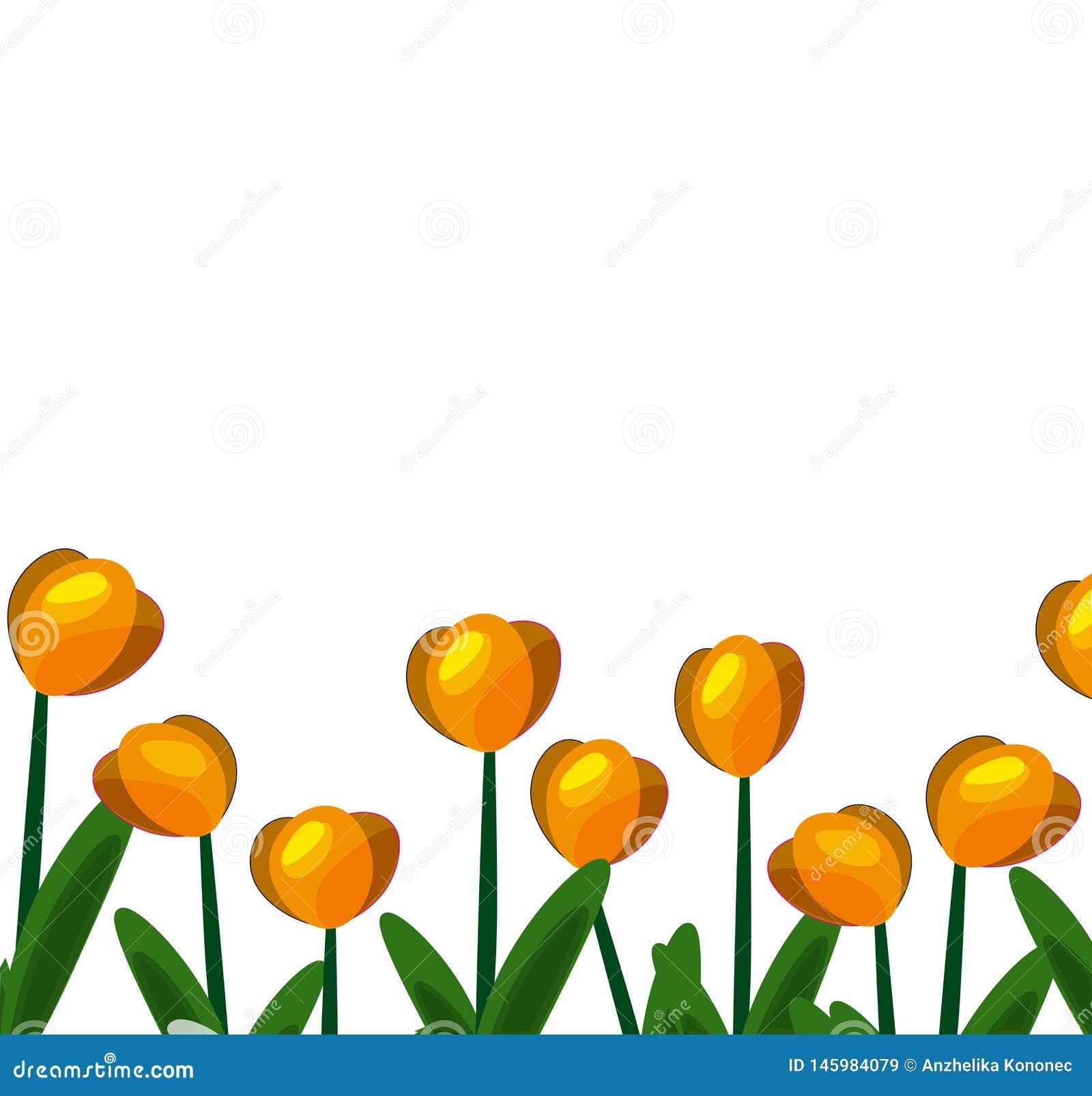 Tulipes background-01 jaune