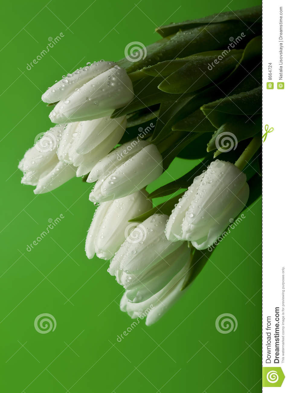 Tulipes blanches humides