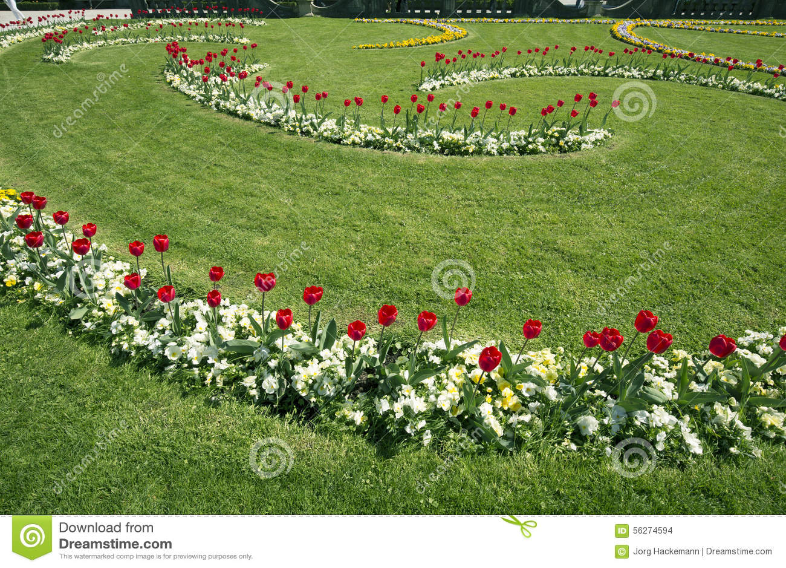 tulipes dans le jardin baroque de mirabell photo stock image du jardins autriche 56274594. Black Bedroom Furniture Sets. Home Design Ideas