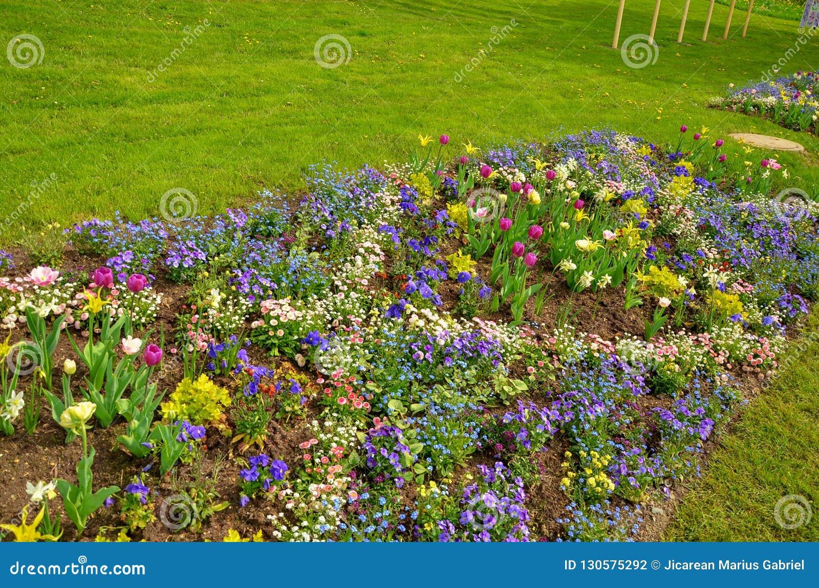 Tulipes de couleur un jour ensoleillé avec le ciel bleu clair
