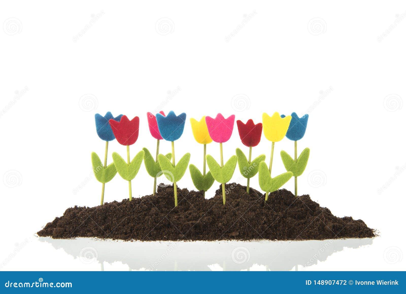 Tulipes de rang?e dans le jardin