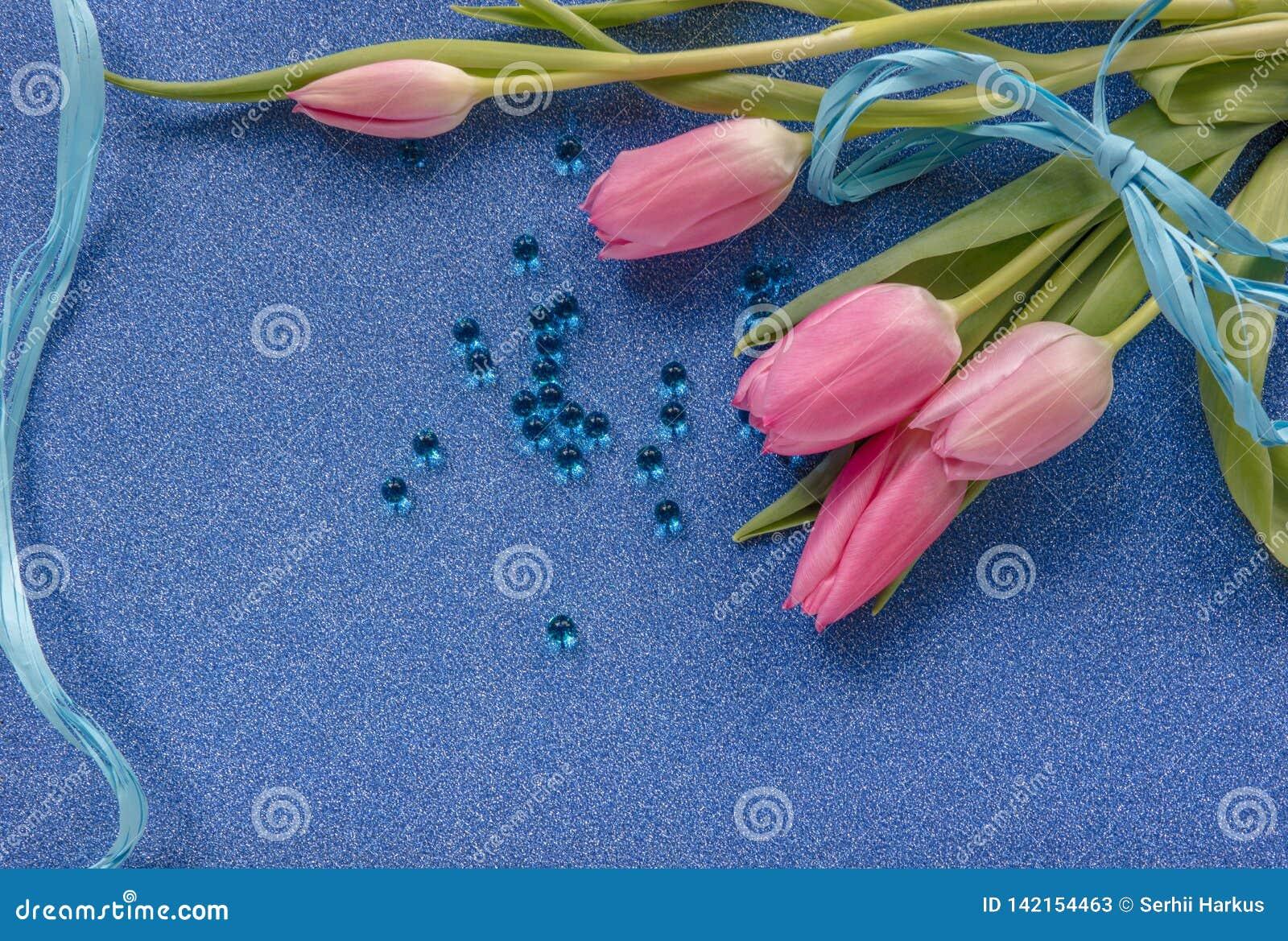 Tulipes roses avec le ruban bleu sur le fond bleu de scintillement avec l espace de copie