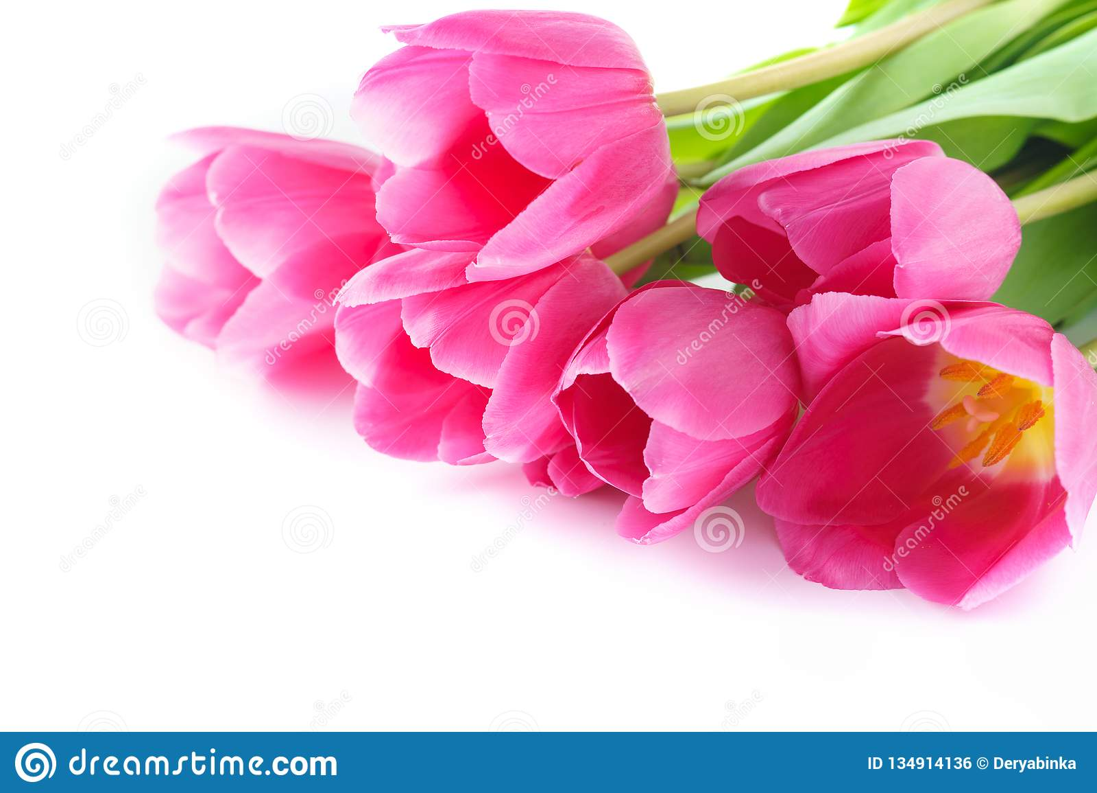 Tulipes roses pour Valentine ou le jour de mère D isolement