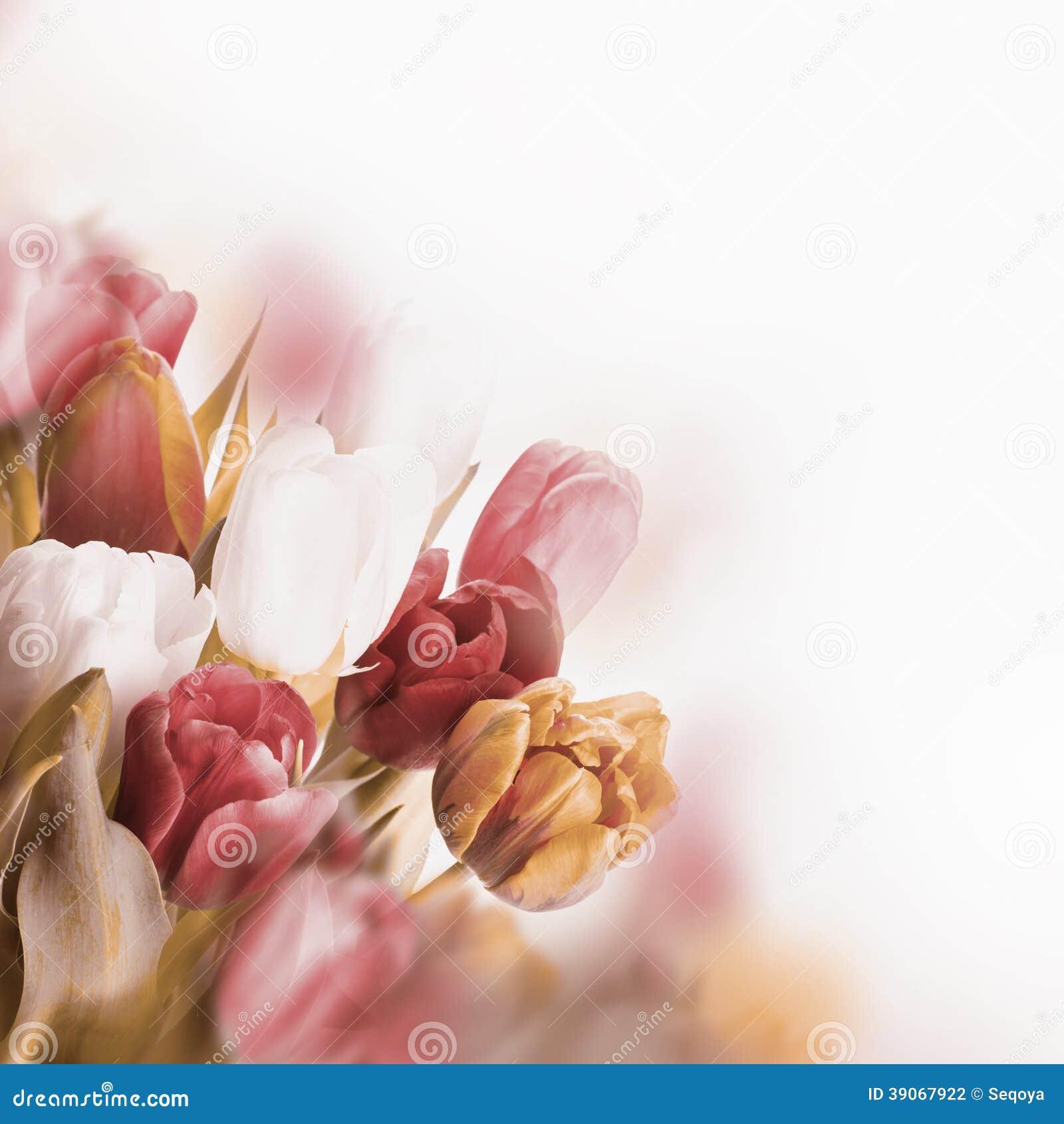 Tulipes rouges avec le vert