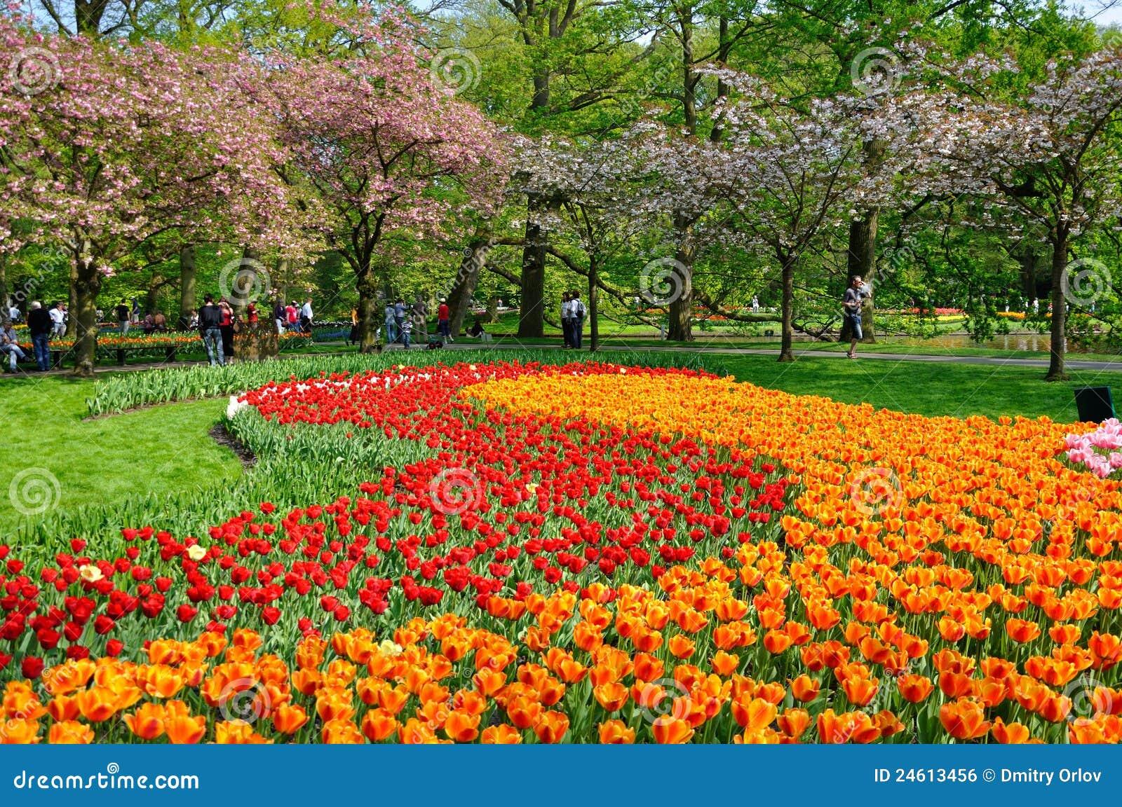 Tulipes rouges et oranges dans Keukenhof