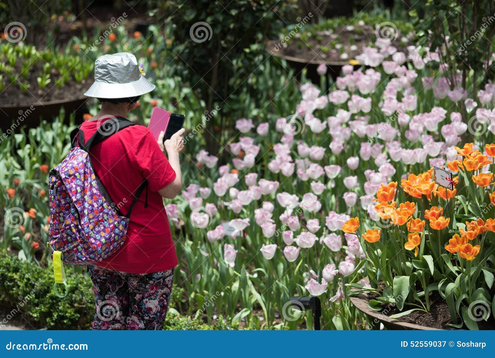 Garden By The Bay Meadow tulipmania 2015 gardensthe bay singapore editorial photography