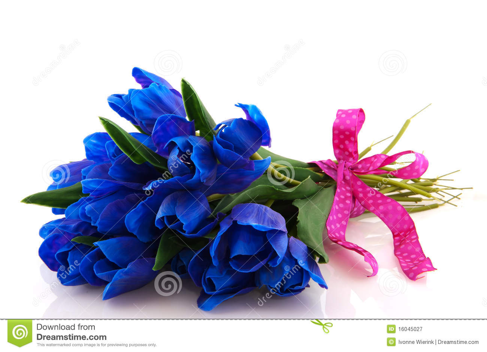 Tulips azuis