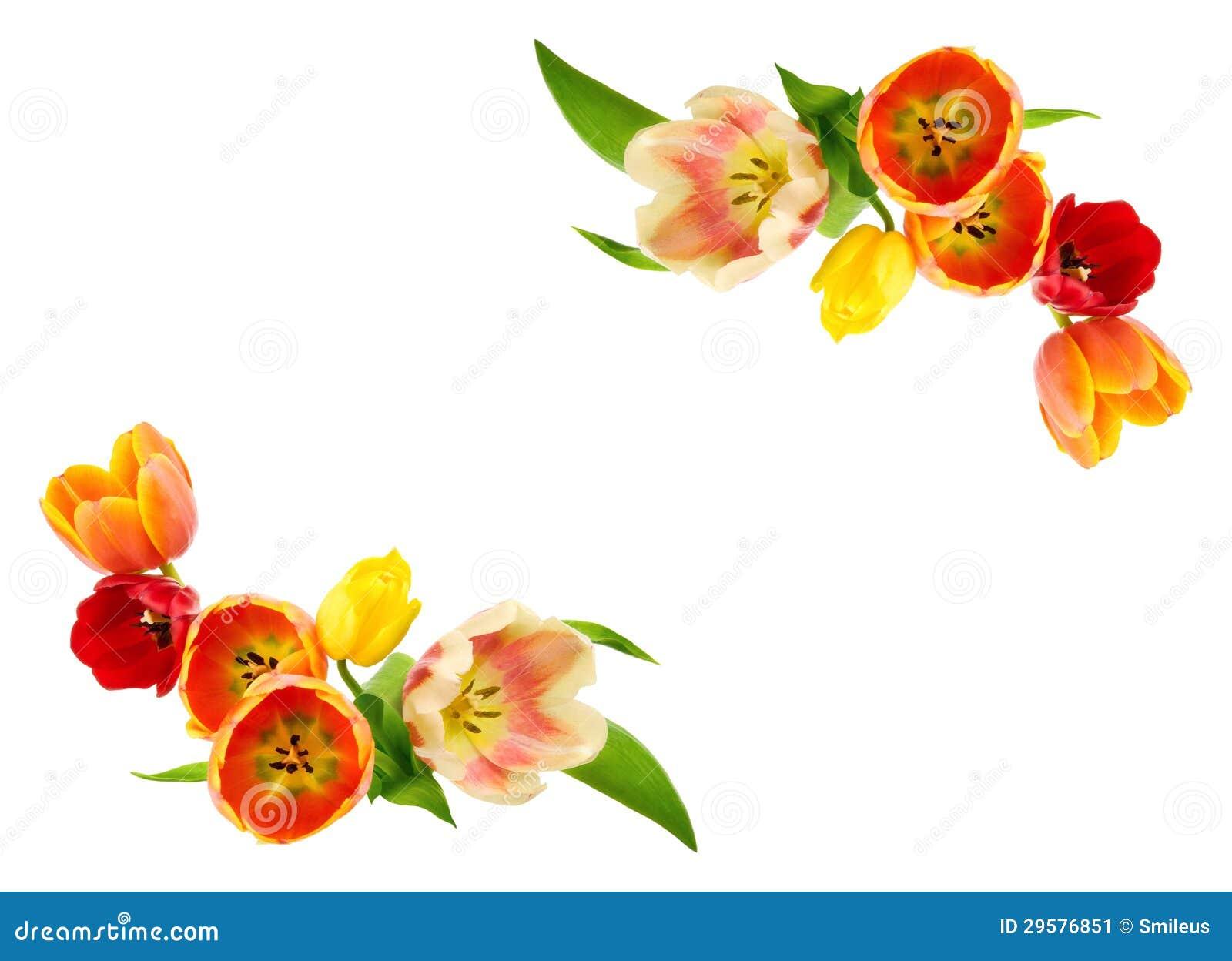 Tulips Border Stock Image - Image: 29576851
