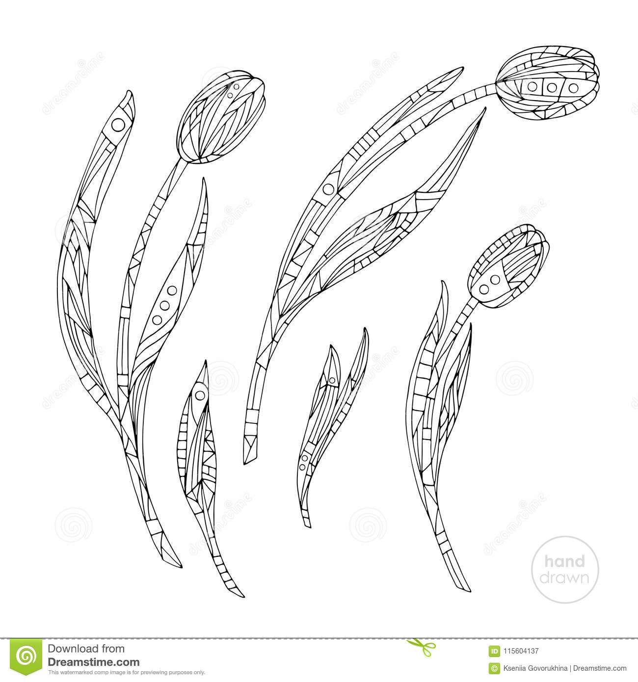 Tulips Coloring Page. Hand Drawn Abstract Flowers Vector ...