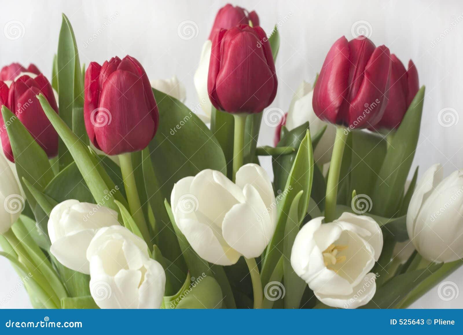 Tulips do ramalhete