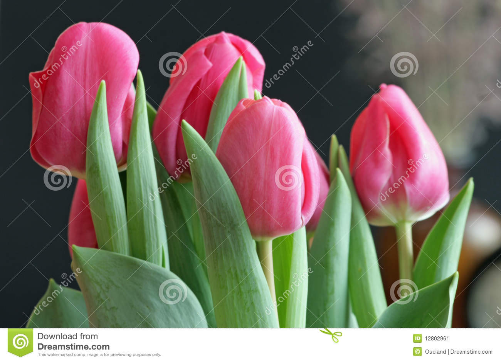 Tulips do Valentim