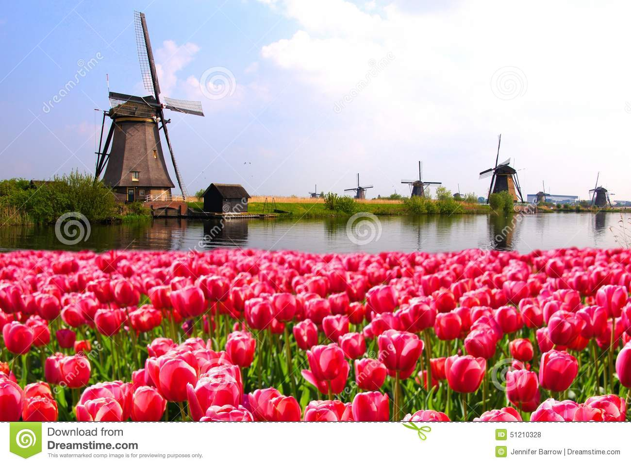 Tulips with Dutch windmills and canal