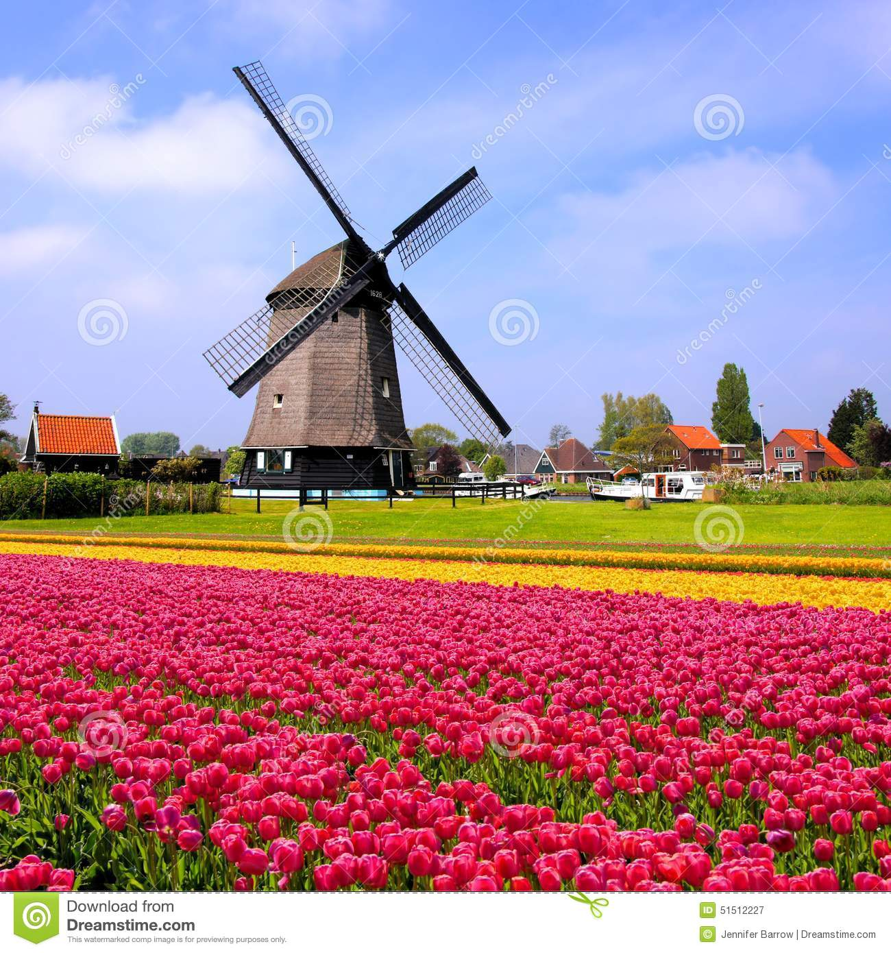 tulips with dutch windmills netherlands stock image. Black Bedroom Furniture Sets. Home Design Ideas