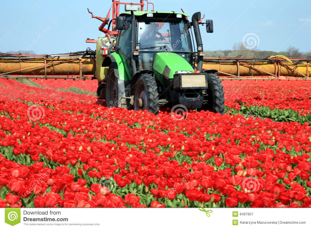 Tulips farm in netherlands royalty free stock photography Farm house netherlands