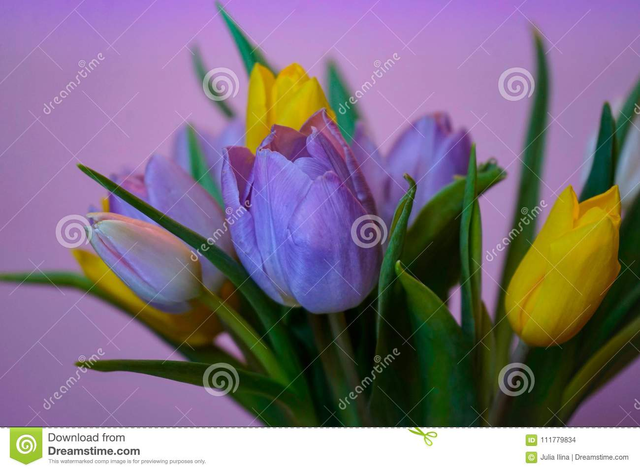 tulips flowers bouquet pink background close-up