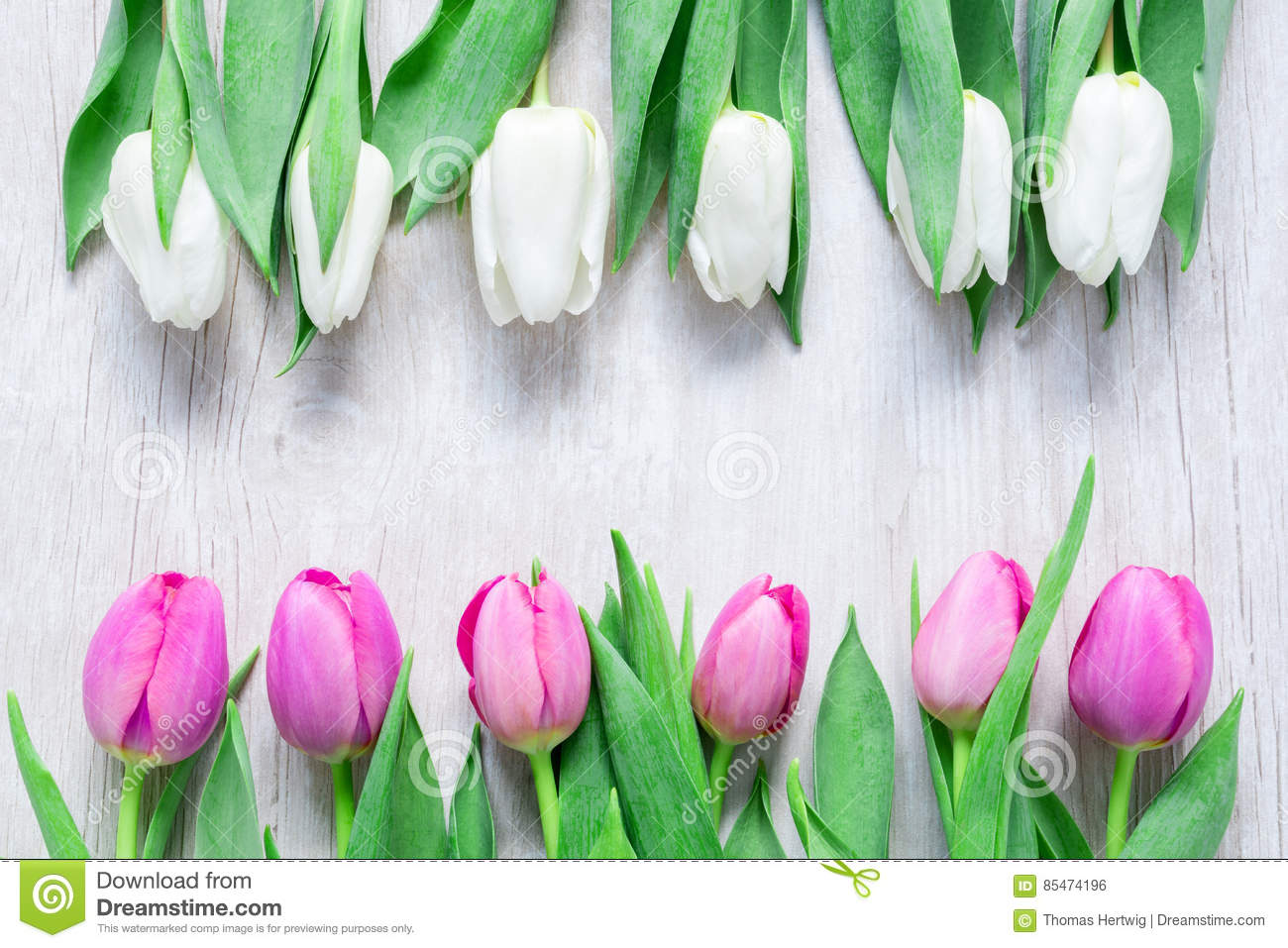 Tulips Flowers In A Row On Wooden Table For March 8 Internatio