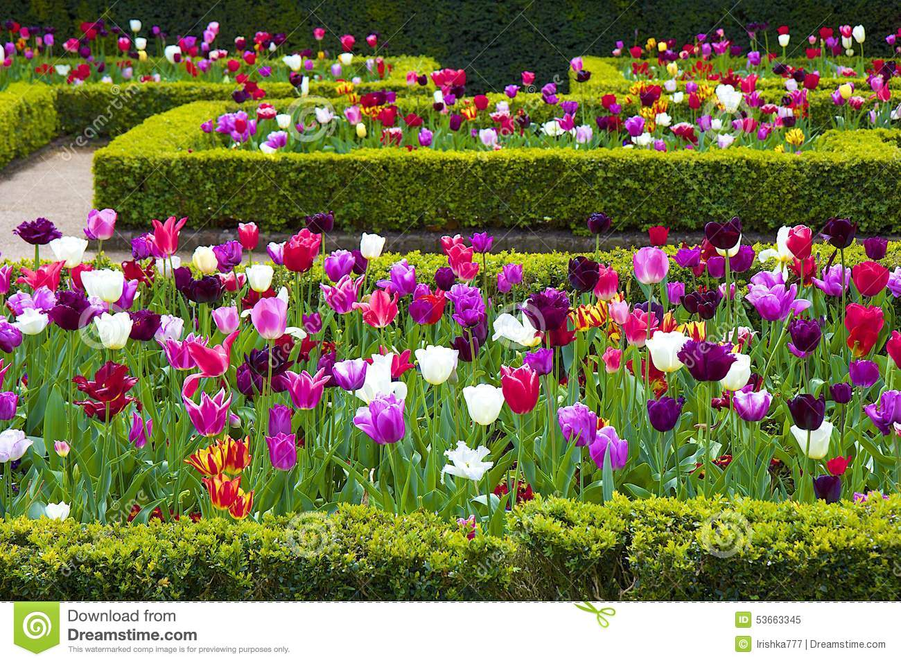 Tulips in holland park london stock image image of grass europe spring flowers blossom in holland park london mightylinksfo