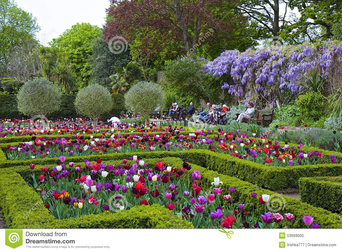 Tulips in holland park london editorial image image of plant download comp mightylinksfo