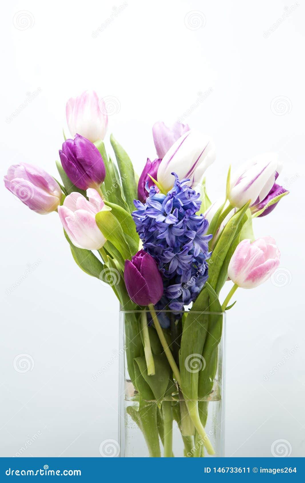 Tulips and hyacinth