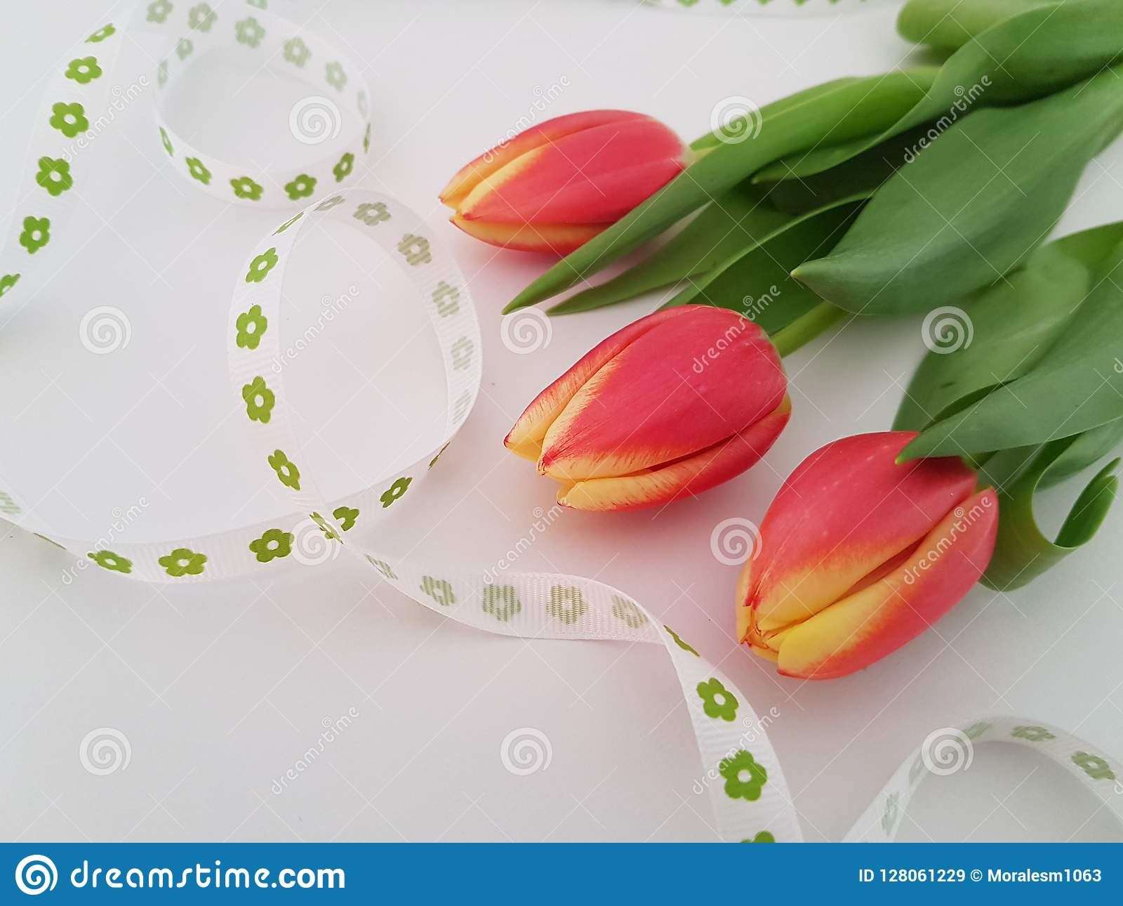 Tulips Laying On A White Background Stock Image Image Of