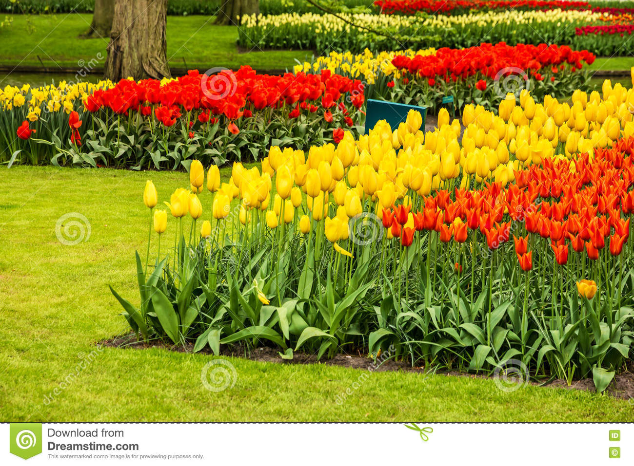 Tulips Park Keukenhof Largest Flower Garden In Europe Holland