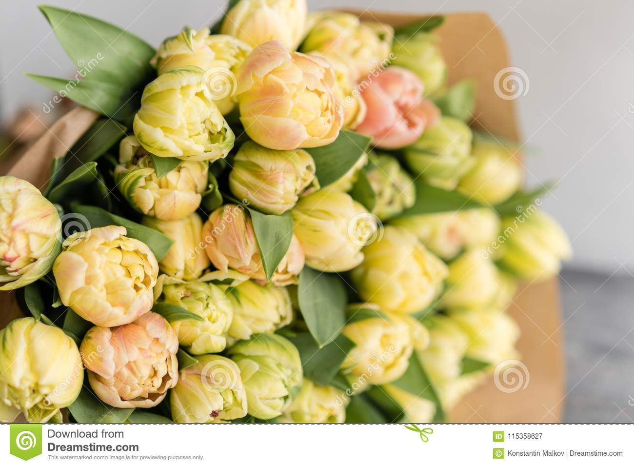 Tulips of pastel yellow color big buds floral natural backdrop tulips of pastel yellow color big buds floral natural backdrop unusual flowers mightylinksfo